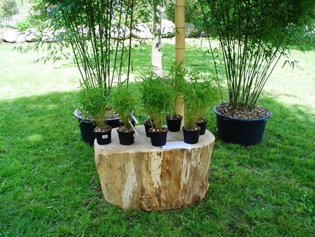 wendland bambus bambus im wendland aktuell. Black Bedroom Furniture Sets. Home Design Ideas